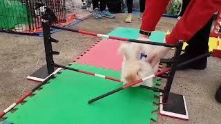 お前らの思い通りにはさせんわ!ジャンプの能力をお披露するコースで暴挙にでたウサギ(カナダ)
