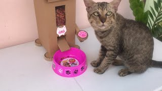 Make a cat feeder from cardboard at home.