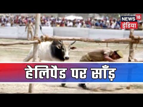 UP: कन्नौज में Akhilesh-Mayawati की रैली में साँड़ का उत्पाद, साँड़ ने सुरक्षकर्मी को मारी टक्कर