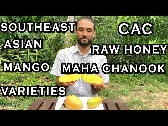 Mangoes From Around The World, Episode 4: Southeast Asian Mangoes - Maha Chanook, Raw Honey, Cac