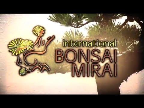 Bonsai Mirai