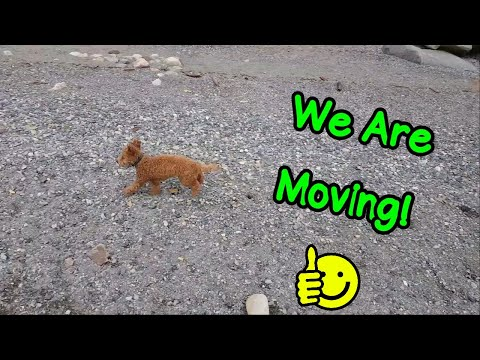 We're Moving! - Random Information - VOL. 4