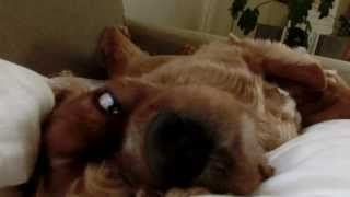 お気に入りの布団でリラッス。寝心地さいこー! どんな夢、みてるのかな。