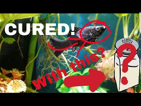 HOW TO CURE POPEYE IN FISH AT HOME! | Yesli Frias