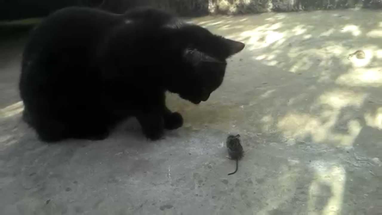 Мышонок пик против кота