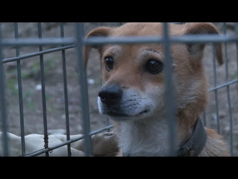 Dog Waits In The Exact Same Place Every Night | Animal in Crisis EP2