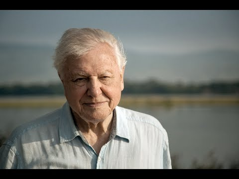 Sir David Attenborough addresses UN climate change summit – watch live