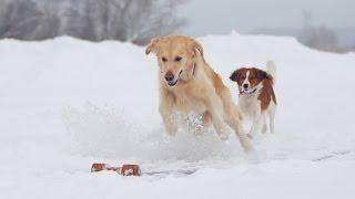 Friends&Dogs