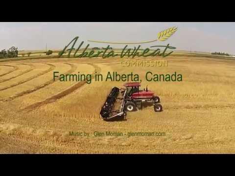 Alberta Wheat - Farming Alberta