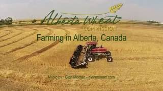Alberta Wheat - Farming Alberta