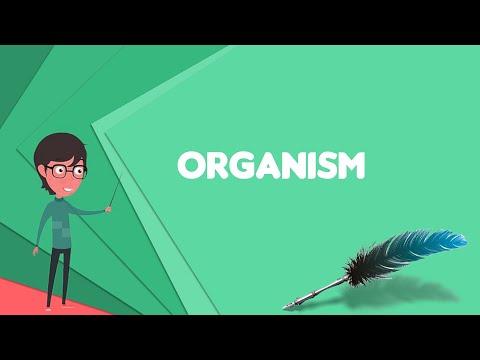 What is Organism? Explain Organism, Define Organism, Meaning of Organism