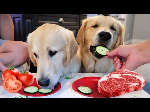 Dogs Review NEW FOODS! Raw Steak, Cucumbers, Tomatoes & Jello!