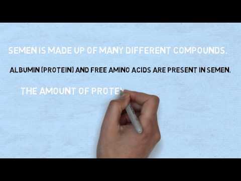 does semen have protein