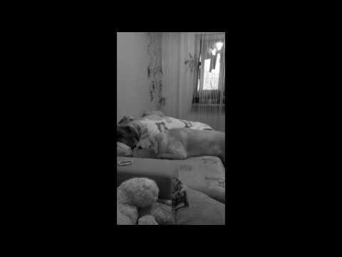 Собака в постели или что происходит когда родителей нет дома)))