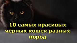 10 самых красивых черных кошек разных пород. Топ 10 лучших.