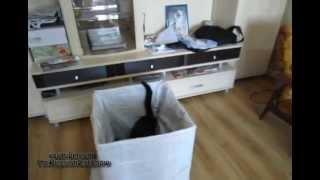 The Cat Trap (Ловушка для кота)