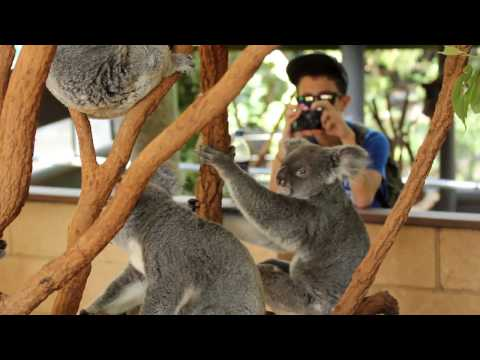 A day at Lone Pine Koala Sanctuary in Brisbane, QLD