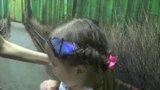 видео Украшение живые бабочки
