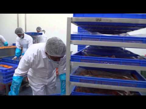 Asmak International Fish Farming Company Promotional Movie