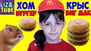 Mcdonald's для животных Хомячок и Крыски жуют 🍔 #Гамбургер Лиза и питомцы LizaTube burger for rats