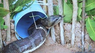 как сделать ловушку для змей своими руками