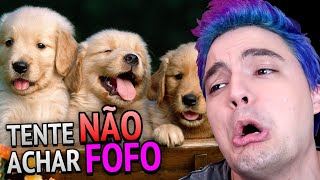 DESAFIO TENTE NÃO ACHAR FOFO - FILHOTES