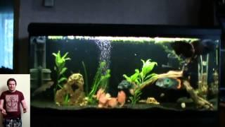 Интерактивный аквариумный туризм №6(Рубрика, куда вы присылаете свое видео и описание аквариума, а мы делаем из этого выпуск. Тема для Заявок:..., 2014-10-12T00:26:42.000Z)