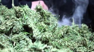 "Mendo Dope-""We Drop Dank"" (Official Music Video)"
