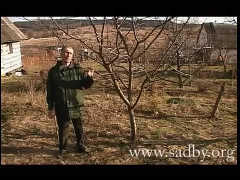 Подкормка дерева и борьба с вредителями. Важный уход за деревьями в саду.