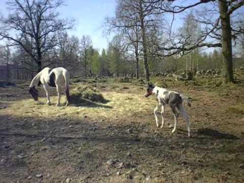 47144c60a7e blogg | horses-4ever
