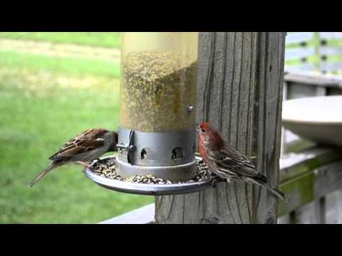 Wild Bird House : A Nuthatch, Downy Woodpecker, House Finch and Sparrow : With sounds of Nature
