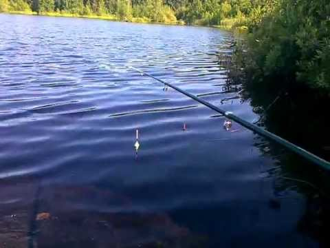 рыбалка получай ротана видео летом