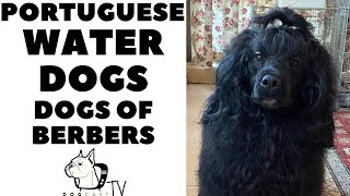 The Berbers' Dogs! PORTUGUESE WATER DOGS!  DogCastTV!