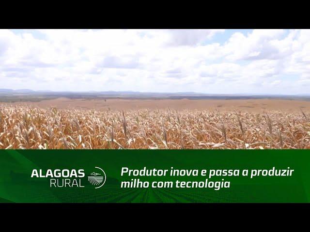 Produtor inova e passa a produzir milho com tecnologia e alta produtividade