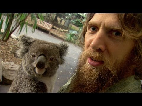 Daniel Bryan Vs. Koalas, Kangaroos and a Goat!