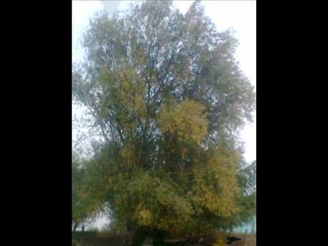 Астраханская   облость    село   марфино