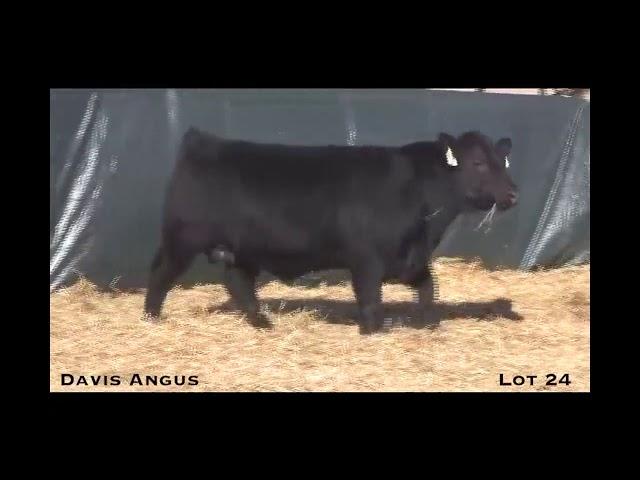 Davis Angus Lot 24