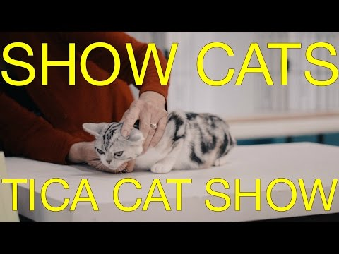 International Cat Show 2017 - TICA Cat Show - The International Cat Association Judging Cats