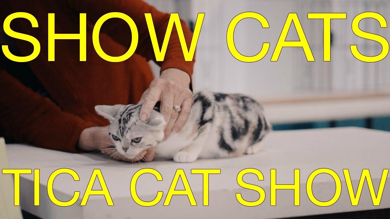 amazon kitty litter box