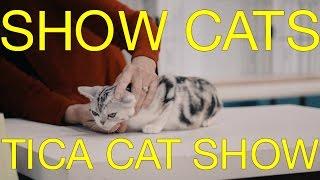 International Cat Show 2017 - TICA Cat Show - The International Cat Association Judging Cats