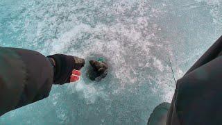Уловистая лунка по последнему льду Рыбалка 2020 Ловля окуня на балансир