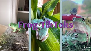 frog tiktoks because frogs are cool