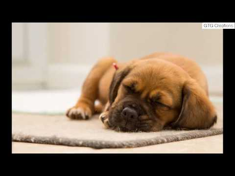 Can Dogs Get Sick From Eating Poop