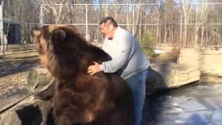 Медведь играет с человеком