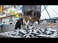 حين تتدخل التكنولوجيا في عمليات صيد الأسماك تكون هذة النتيجة ...مشاهدة مذهله