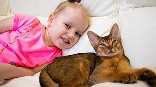 Gaby y Alex jugando con gracioso gatito lindo. Nuestra nueva mascota familiar