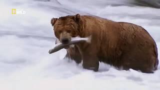Gli animali più pericolosi: Alaska Ep1 Campo di battaglia