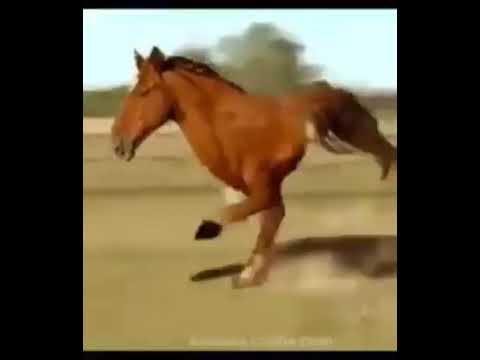 الحصان له رجلين سبحان الله