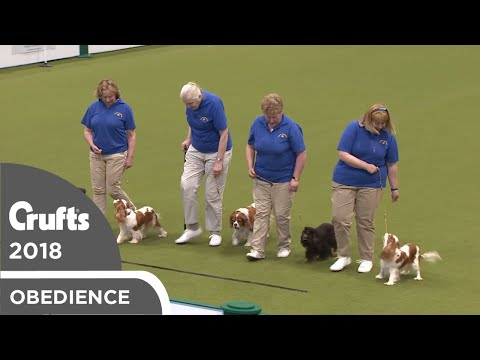 Obreedience - Canny Cavaliers | Crufts 2018