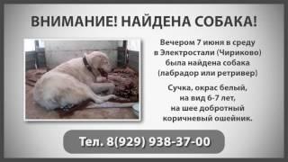 Объявление! Найдена собака